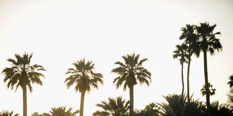 Tree, Woody plant, Arecales, Palm tree, Symmetry, Tropics,