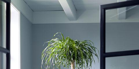 Interior design, Wall, Fixture, Glass, Interior design, Houseplant, Transparent material, Daylighting,