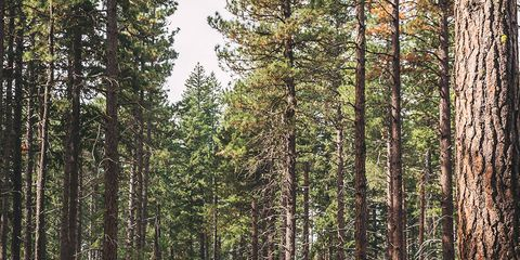 People in nature, Tree, Forest, Nature, Natural environment, Natural landscape, People, Woodland, Wilderness, Leaf,