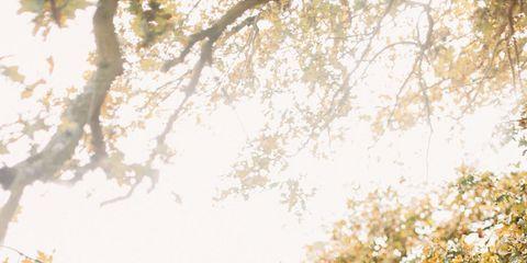Nature, Brown, Sleeve, Shoulder, People in nature, Summer, Sunlight, Waist, Light, Beauty,