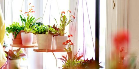 Flowerpot, Plant, Interior design, Interior design, Houseplant, Window treatment, Window covering, Vase, Curtain, Peach,