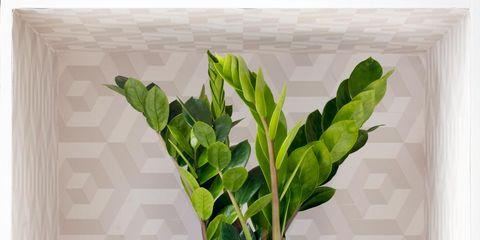 Leaf, Flowerpot, Wall, Interior design, Houseplant, Plant stem, Vase, Annual plant, Herbaceous plant,