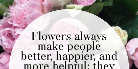 Petal, Text, Pink, Magenta, Font, Purple, Violet, Lavender, Poster, Annual plant,