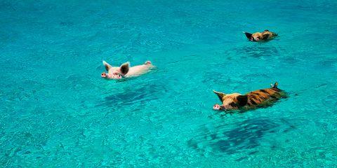 Fluid, Water, Liquid, Aqua, Carnivore, Turquoise, Azure, Teal, Dog, Canidae,