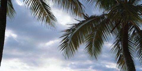 Sky, Water, Liquid, Arecales, Woody plant, Ocean, Tropics, Sea, Palm tree, Beach,