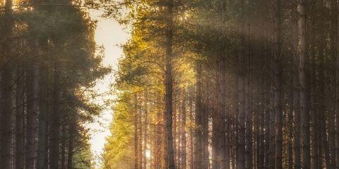 Nature, Vegetation, Wood, Natural environment, Natural landscape, Leaf, Tree, Deciduous, Forest, Sunlight,