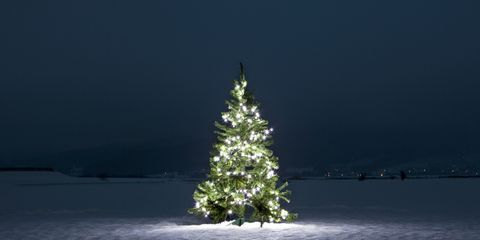 Nature, Branch, Winter, Water resources, Leaf, Christmas decoration, Evergreen, Freezing, Christmas tree, Midnight,