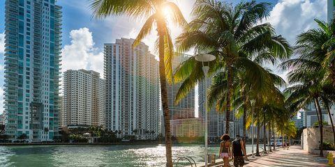Tower block, Tree, Building, Condominium, Commercial building, Arecales, Woody plant, Skyscraper, Metropolitan area, Sunlight,