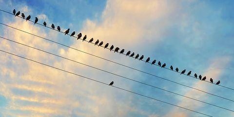 Sky, Cloud, Blue, Daytime, Bird migration, Flock, Animal migration, Atmosphere, Line, Morning,