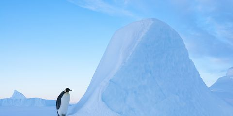 Flightless bird, Iceberg, Penguin, Ice, Polar ice cap, Arctic, Sea ice, Natural environment, Ice cap, Bird,