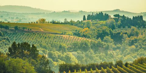 Nature, Field, Natural landscape, Atmospheric phenomenon, Hill, Vineyard, Agriculture, Morning, Rural area, Plantation,