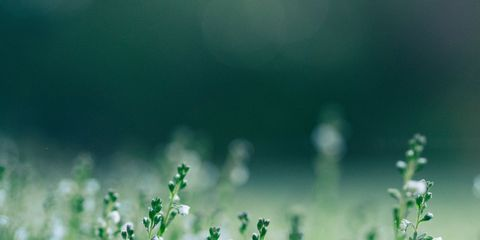 Water, Green, Nature, Macro photography, Flower, Grass, Plant, Moisture, Dew, Spring,
