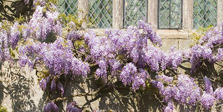 Purple, Flower, Shrub, Lavender, Botany, Woody plant, Garden, Violet, Lilac, Spring,