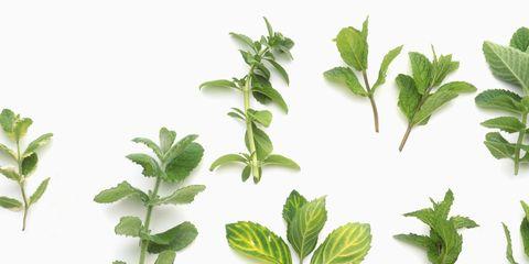 Leaf, Plant, Flower, Tree, Branch, Botany, Flowering plant, Woody plant, Plant stem, Herb,