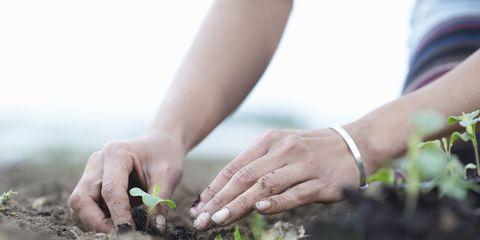 Soil, Hand, Sowing, Plant, Plantation, Finger, Gardener, Gesture, Nail, Farm,
