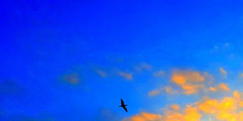 Sky, Blue, Daytime, Atmosphere, Azure, Cloud, Evening, Calm, Electric blue, Wing,