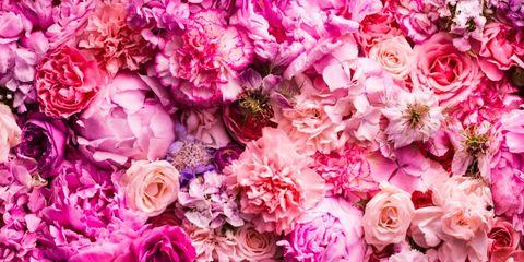 Petal, Flower, Red, Purple, Pink, Magenta, Floristry, Cut flowers, Flower Arranging, Flowering plant,