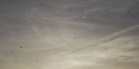 Sky, Cloud, Horizon, Sea, Water, Flock, Ocean, Morning, Calm, Seabird,