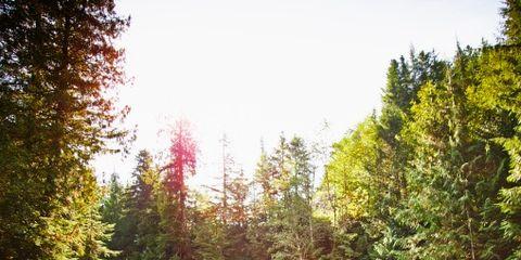 Rock, Sunlight, Bedrock, Forest, Wilderness, Back, Boulder, Larch, Conifer, Temperate broadleaf and mixed forest,