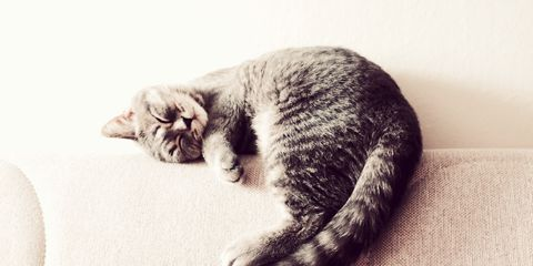 Cat, Small to medium-sized cats, White, Felidae, Whiskers, Black-and-white, Fur, Ear, Tabby cat, Carnivore,