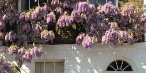 Purple, Lilac, Property, Flower, Lavender, Home, Plant, House, Violet, Door,