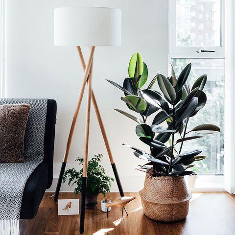 Flowerpot, Houseplant, Flower, Plant, Room, Interior design, Living room, Furniture, Shelf, Branch,