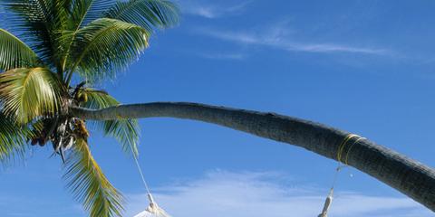 Hammock, Tropics, Vacation, Sky, Caribbean, Tree, Swing, Outdoor furniture, Beach, Leisure,
