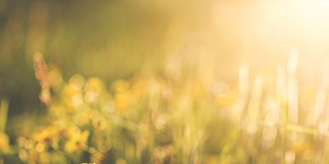 People in nature, Yellow, Nature, Natural landscape, Flower, Sunlight, Meadow, Grass, Sky, Spring,