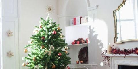 Christmas tree, Christmas decoration, Christmas, White, Tree, Christmas ornament, Home, Room, Houseplant, Christmas eve,