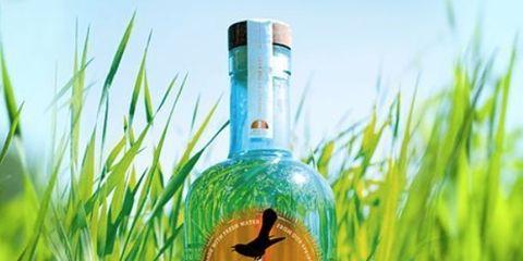 Grass, Grass family, Plant, Bottle, Glass bottle, Tree, Liqueur, Liquid, Lawn, Cypress family,