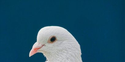 Nature, Skin, Bird, Beak, Organism, Vertebrate, Photograph, White, Adaptation, Light,