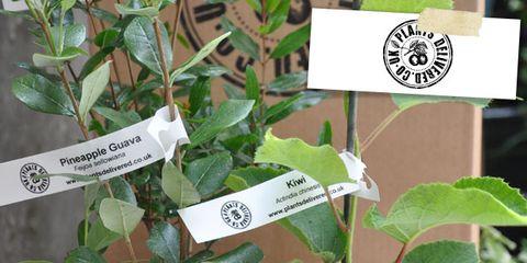 Flowerpot, Soil, Houseplant, Interior design, Terrestrial plant, Annual plant, Compost, Plant stem, Herbaceous plant, Herb,