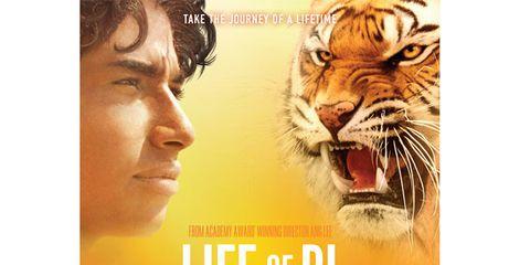 Bengal tiger, Big cats, Facial expression, Jaw, Adaptation, Siberian tiger, Felidae, Tiger, Temple, Carnivore,