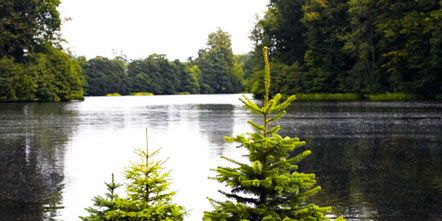 Nature, Water resources, Tree, Reflection, Bank, Watercourse, Reservoir, Evergreen, Shrub, Lake,
