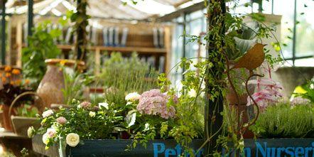 Plant, Bicycle wheel, Flowerpot, Flower, Bicycle wheel rim, Rim, Spoke, Bicycle accessory, Bicycle, Bicycle tire,