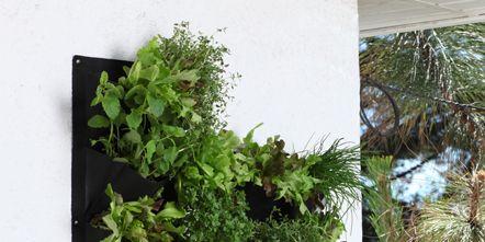 Herb, Annual plant, Flowerpot, Houseplant,