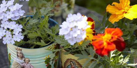 Petal, Flower, Flowering plant, Mason jar, Home accessories, Flowerpot, Vase, Annual plant, Bouquet, Daisy family,