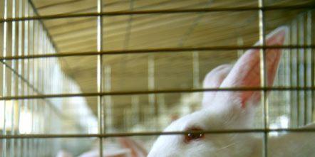 Skin, Vertebrate, Rabbit, White, Domestic rabbit, Rabbits and Hares, Cage, Iris, Pet supply, Animal shelter,