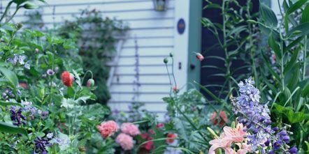 Plant, Shrub, Garden, Flower, Flowering plant, Petal, Purple, Terrestrial plant, Backyard, Yard,