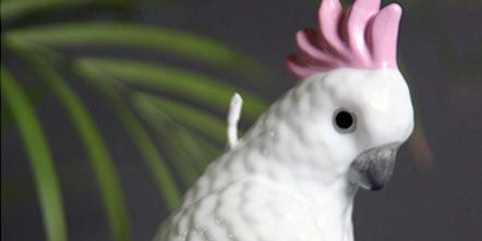 Parrot, Green, Cockatoo, Organism, Bird, Skin, Beak, Vertebrate, White, Wing,