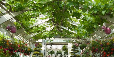 Flower, Garden, Shrub, Botany, Petal, Greenhouse, Botanical garden, Annual plant, Flowerpot, Arch,