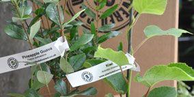 Flowerpot, Leaf, Soil, Botany, Houseplant, Terrestrial plant, Plant stem, Annual plant, Interior design, Herb,