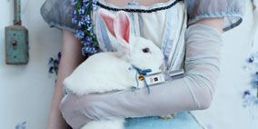 Textile, Rabbits and Hares, Rabbit, Hare, Fur, Toy, Domestic rabbit, Plush, Switch, Easter bunny,