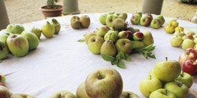Vegan nutrition, Food, Whole food, Local food, Natural foods, Fruit, Ingredient, Produce, Staple food, Superfood,