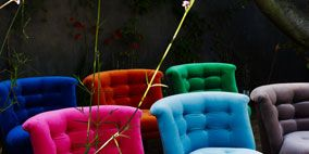 Blue, Furniture, Petal, Purple, Magenta, Shrub, Teal, Turquoise, Annual plant, Armrest,