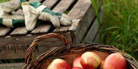 Produce, Local food, Whole food, Natural foods, Food, Fruit, Vegan nutrition, Ingredient, Apple, Peach,