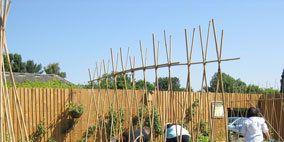 Plant, Plant community, Soil, Land lot, Shrub, Agriculture, Garden, Home fencing, Grass family, Farm,