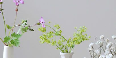 Flower, Petal, Artifact, Interior design, Serveware, Vase, Porcelain, Still life photography, Flowerpot, Flower Arranging,