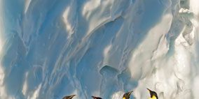 Penguin, Nature, Daytime, Natural environment, King penguin, Emperor penguin, Atmosphere, Bird, Photograph, Beak,