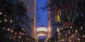 Branch, Lighting, Christmas decoration, Light, Arch, Interior design, Holiday, Christmas tree, Christmas lights, Midnight,